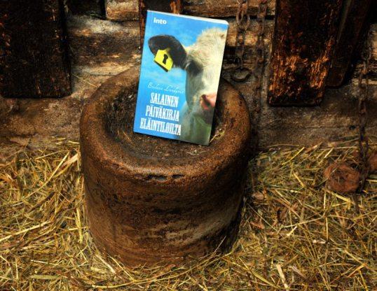 Salainen päiväkirja eläintiloilta -kirja lehmän kupissa ketjujen vieressä parsinavetassa.