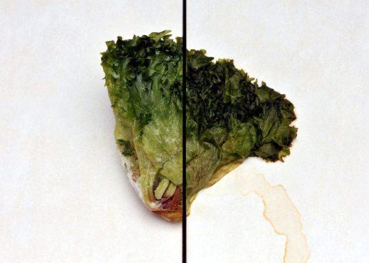 Kerä jääsalaattia kahden laatan päällä: vasemmalla jäätyneenä, oikealla sulaneena.