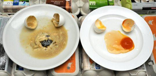 Kaksi rikottua kananmunaa. Vasemmalla lautasella mädäntynyt muna, oikealla mädäntymätön. Taustalla kananmunapakkauksia.