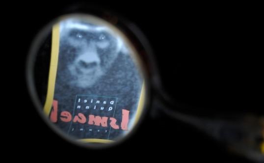 Ismael-romaanin kansikuvan gorilla kuvattuna käsipeilin kautta.