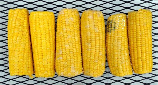 Kuusi maissintähkää metalliritilän päällä.