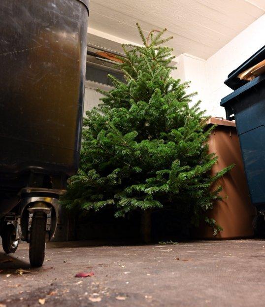 Joulukuusena käytetty pihta taloyhtiön jätehuoneessa.